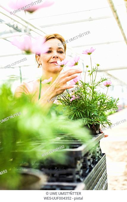 Woman in nursery looking at flower