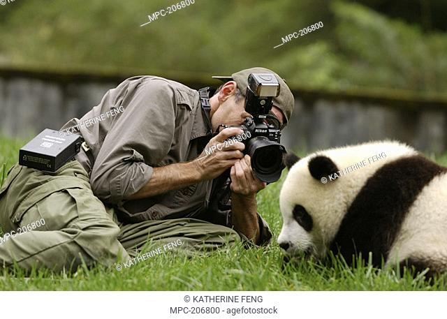 Giant Panda Ailuropoda melanoleuca, endangered, Gerry Ellis photographing baby at the China Conservation and Research Center for the Giant Panda