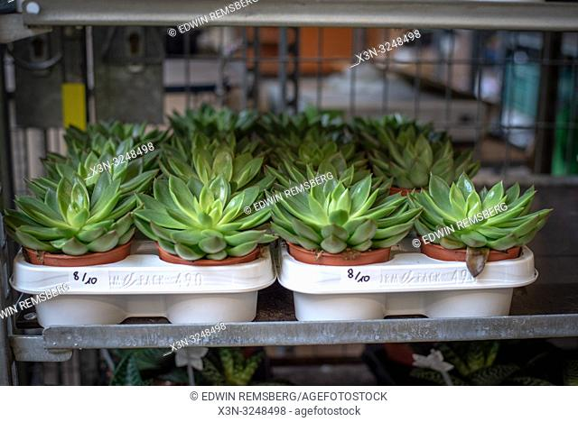 Small succulents potted and organized in trays ready for retail at the Bronisze Wholesale Market - one of the biggest fruits and vegetables markets in Poland