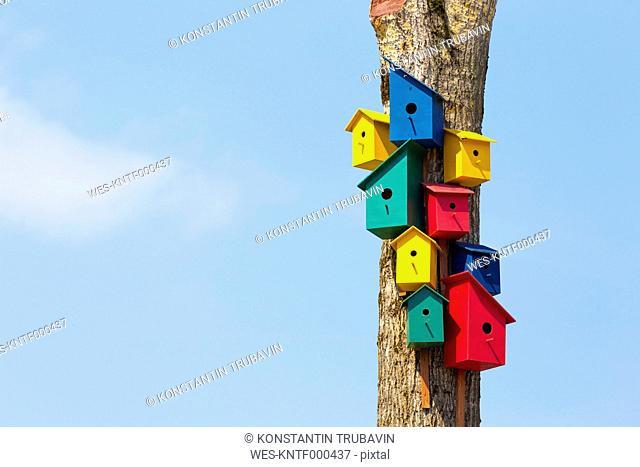 Colorful birdhouses on tree