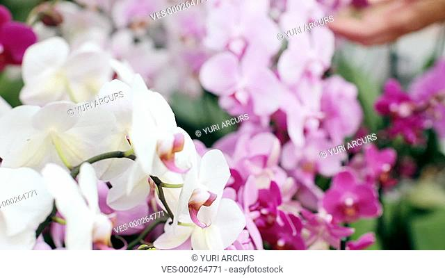 Pretty woman smelling the subtle fragrance of a selection of fresh colourful orchids
