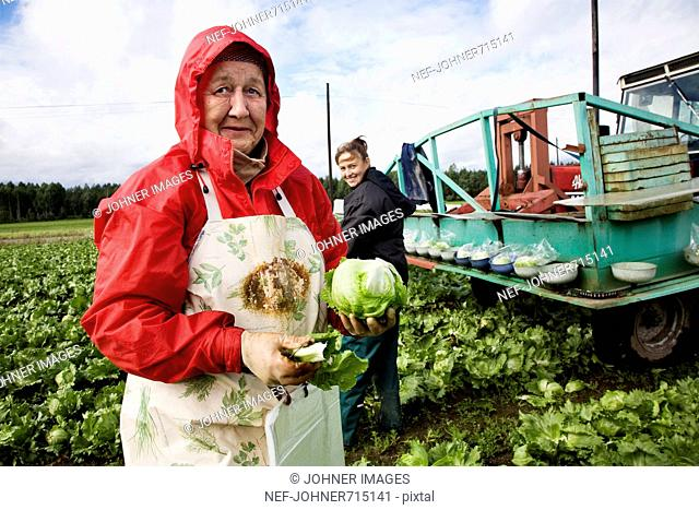 Women working on a field of cabbage, Finland