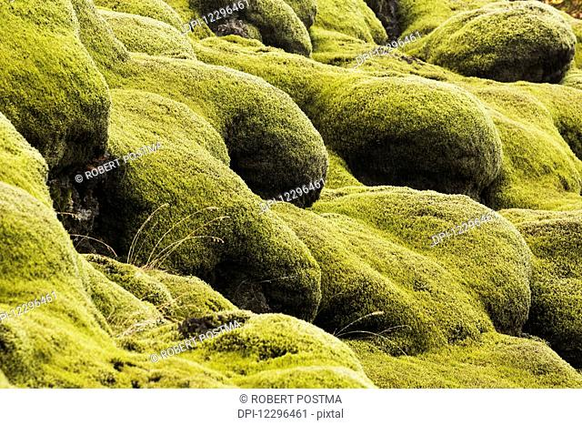 Moss covered lava; Iceland