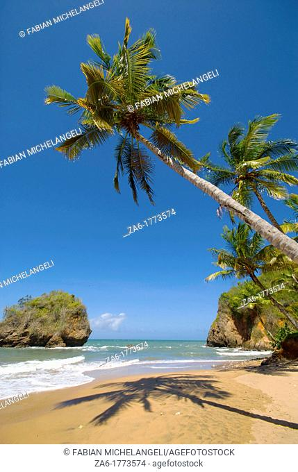 Tropical beach with palm trees in the eastern coast of Venezuela