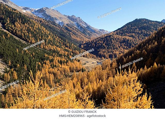 France, Hautes Alpes, the Brianconnais area in autumn, Vallon des Ayes