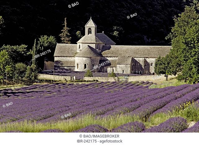 Abbey of Senanque, Vaucluse, South-France, France