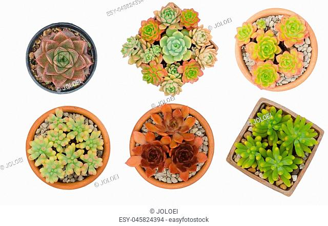 six different cactus in pots isolated on white background