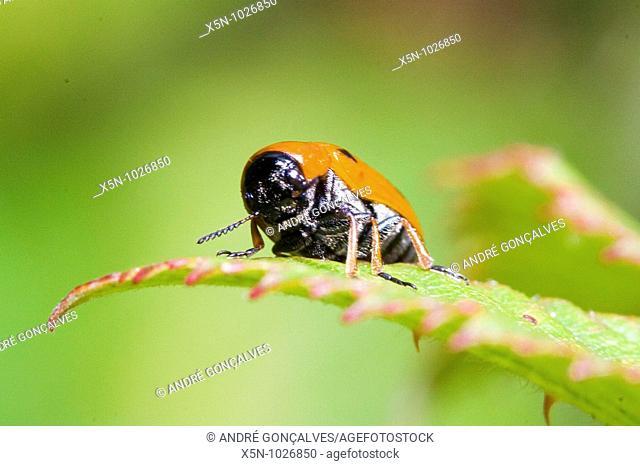 Bug, Evora, Portugal