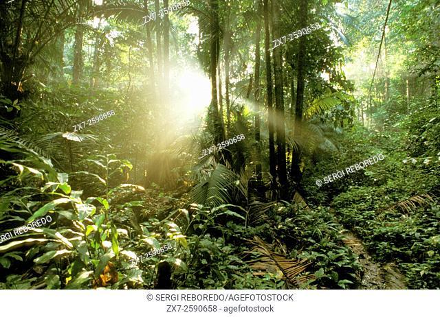 Rainforest between Tekek and Juara, Pulau Tioman Island, Malaysia,