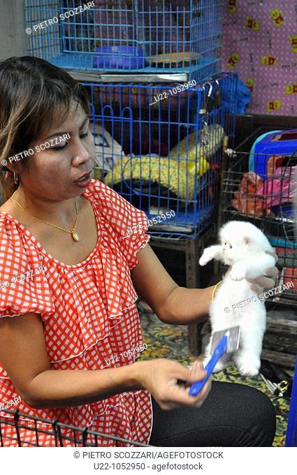 Bangkok (Thailand): a kittens seller brushing a little cat at the Weekend Market