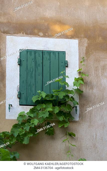 Detail of a house with a window and a vine in the village of Roussillon in the Luberon, Provence-Alpes-Cote d Azur region in southern France