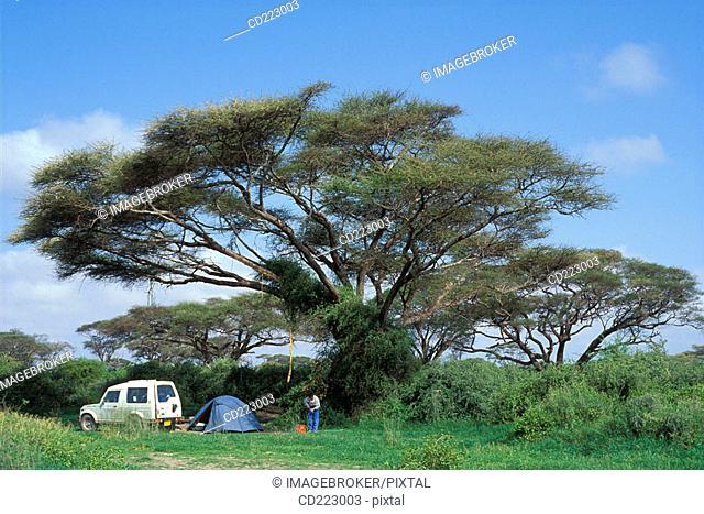 Camping under a acacia tree in the Amboseli National Park, Kenya