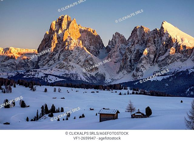 Alpe di Siusi/Seiser Alm, Dolomites, South Tyrol, Italy. Sunset on the Alpe di Siusi/Seiser Alm. In the background the peaks of Sassolungo/Langkofel and...