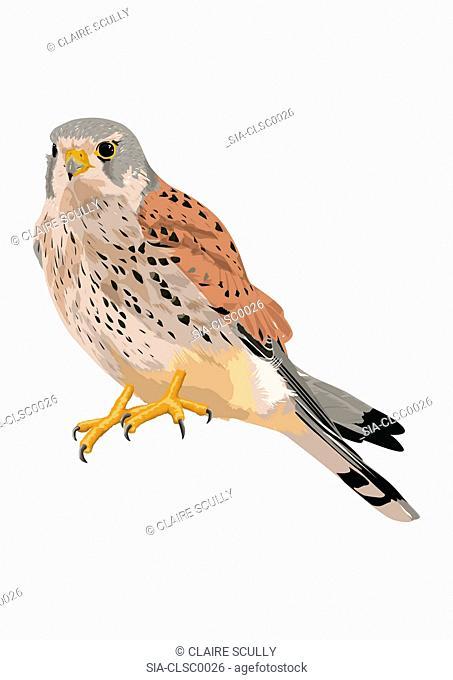 Grey patterned bird