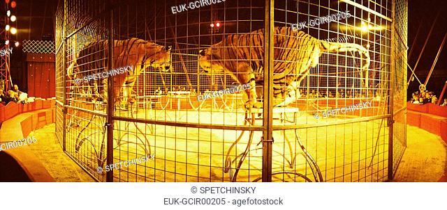 Tigers in circus