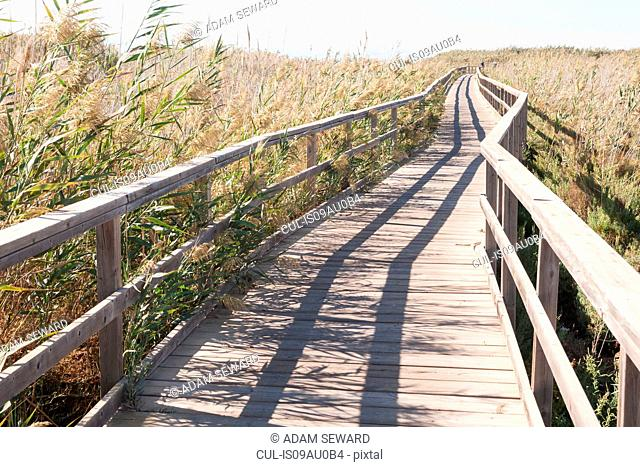 Nature boardwalk through reed bed behind the Mar Menor, Costa Calida, San Javier, Costa Calida, Murcia Region, Spain