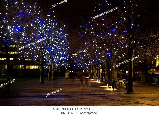 Trees with Christmas decoration, blue lights, South Bank, London, England, United Kingdom, Europe