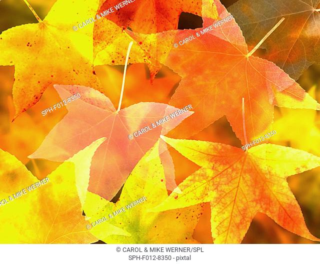 Illustration of a collection of brightly coloured autumn leaves