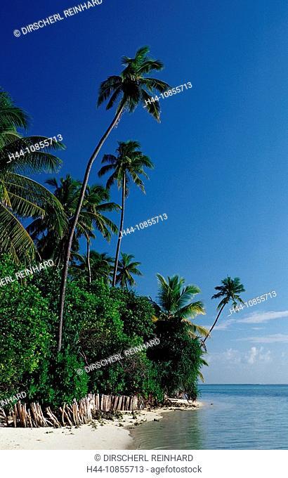 10855713, Maldives, Indian Ocean, Medhufushi, Meem