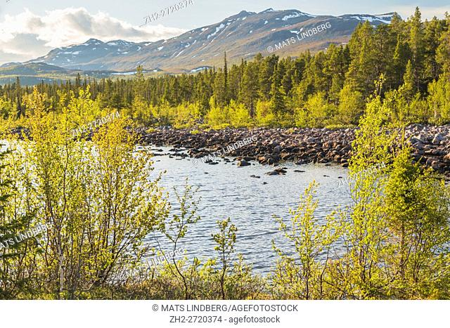 Spring time in Stora sjöfallets national park, little snow on the mountains, birch trees budding, little creek running by, Gällivare, Swedish Lapland, Sweden
