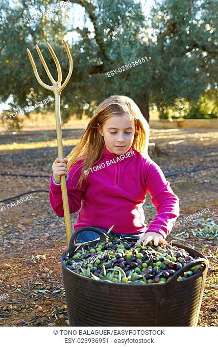 Olives harvest farmer kid girl picking in Mediterranean