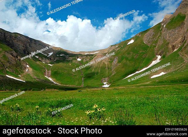 Summer High Mountain pasture