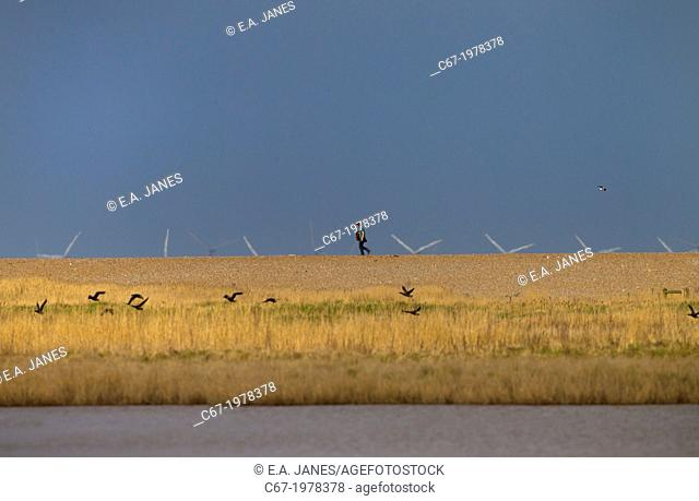 Cley Nature reserve Norfolk in Spring with birdwatcher and offshore windfarm