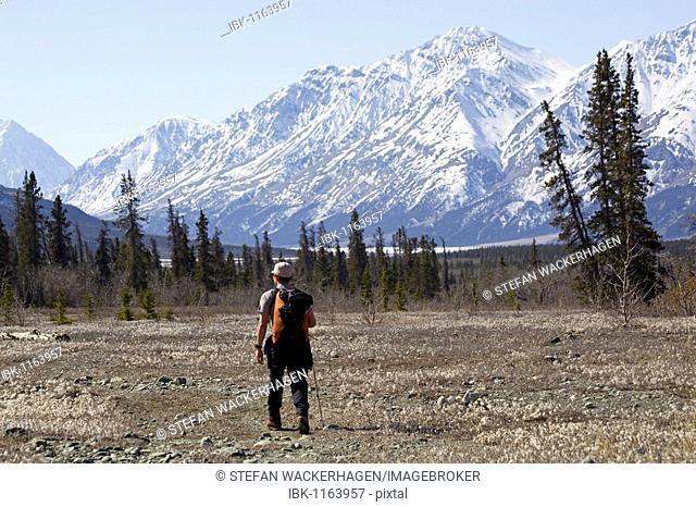 Hiking along Slims River Valley, Kaskawulsh Glacier behind, Kluane National Park, Yukon Territory, Canada