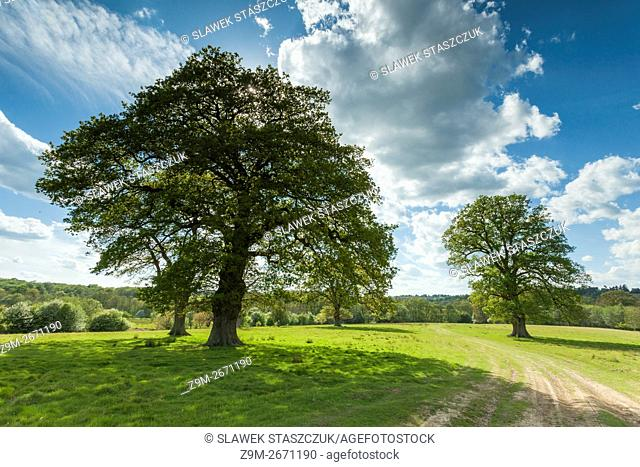 Spring afternoon in Eridge Old Park near Crowborough, East Sussex, England. High Weald