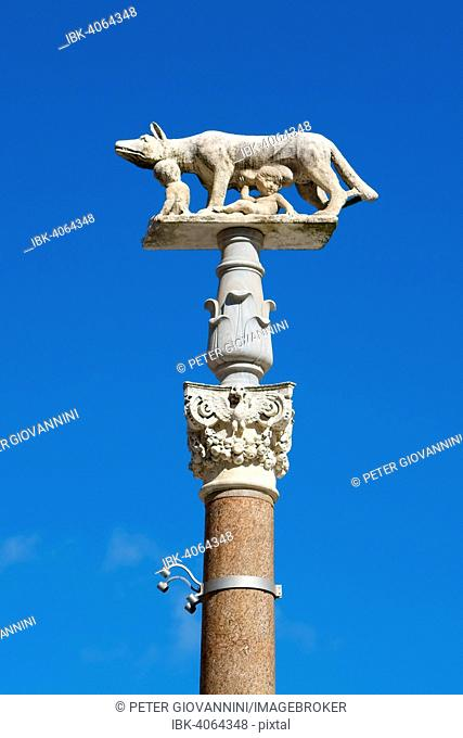 Pillar of the she-wolf with Romulus and Remus in front of the Duomo of Siena, Cattedrale di Santa Maria Assunta, Siena, Province of Siena, Tuscany, Italy