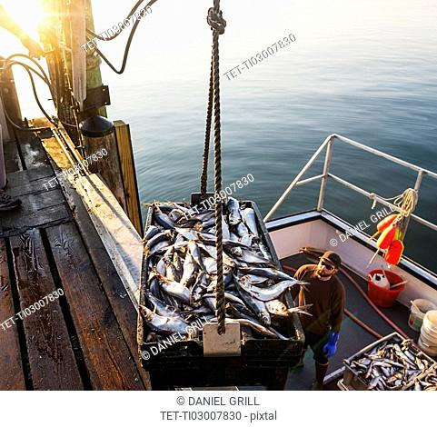 Men loading fish on boat