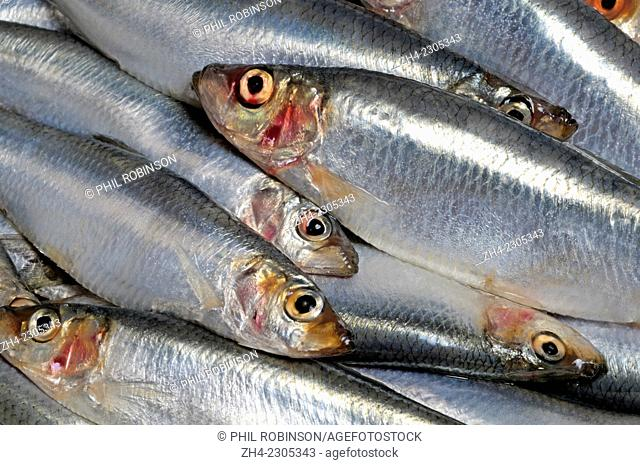 Whole Sprats, bought from a supermarket