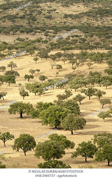 Dehesa, oak forest. San Vicente de Alcántara. Badajoz province. Extremadura. Spain