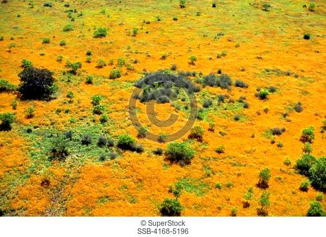 usa, texas, near junction aerial photo of pasture with indian blanket