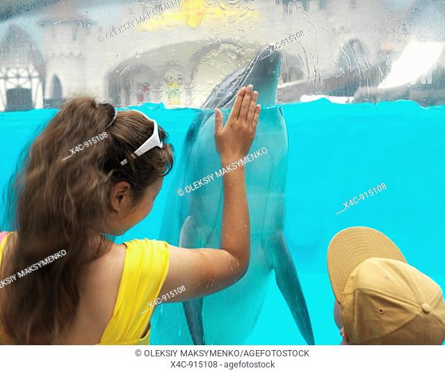 Dolphin greeting people by splashing them with water over the edge of the tank  Marineland Niagara Falls Ontario Canada
