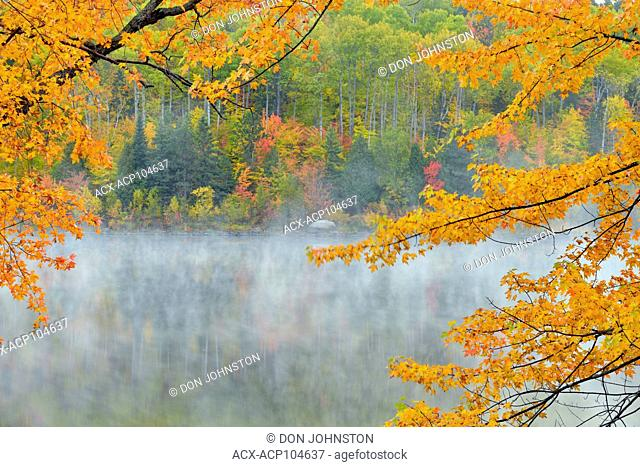 Autumn maple overhanging misty McCharles Lake, Greater Sudbury, Ontario, Canada