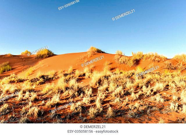 Desert landscape in the NamibRand Nature Reserve in Namibia