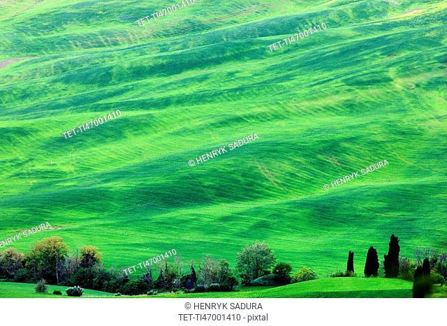 Green rolling landscape