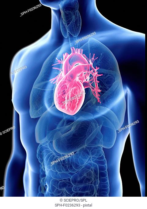 Illustration of a man's heart