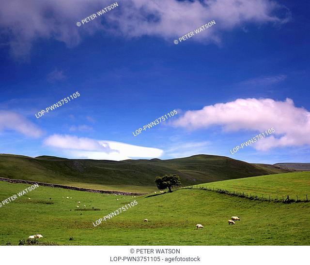England, Cumbria, Kirby Lonsdale. A single tree in a rolling rural landscape around Kirby Lonsdale. The hills mark the boundaries of the Lake District and the...