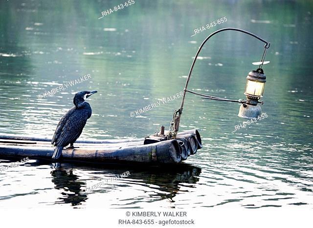 Cormorant bird used for fishing sits on a bamboo raft with a lit lantern, Yangshuo, Guangxi, China, Asia