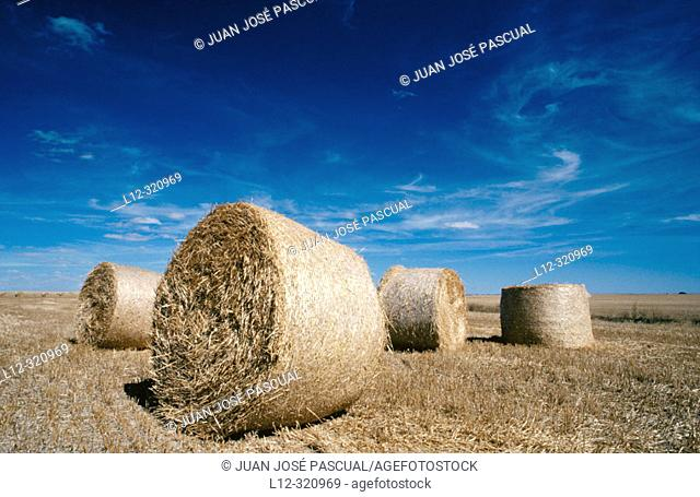 Rural landscape with straw bales. Palencia province, Spain