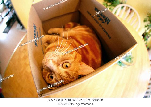 Playful cat in box