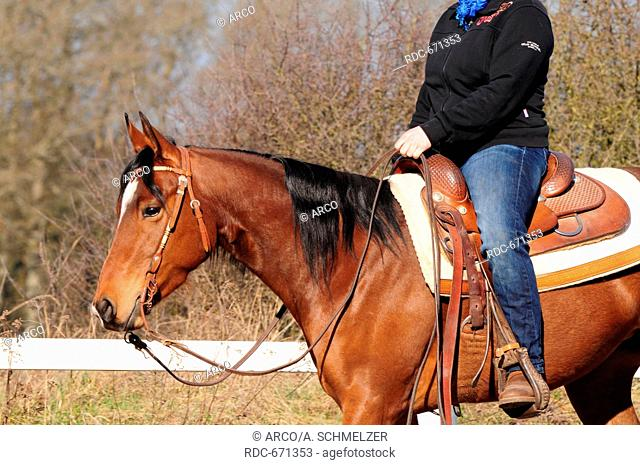Western Riding, American Quarter Horse, mare, workout, western tack, snaffle with shanks, western saddle, stock saddle