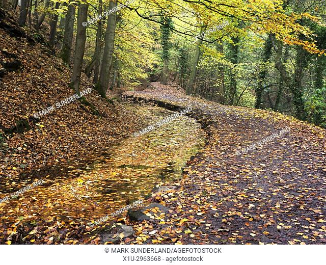 Fallen Autumn Leaves in the Mill Leat in Skipton Castle Woods at Skipton North Yorkshire England