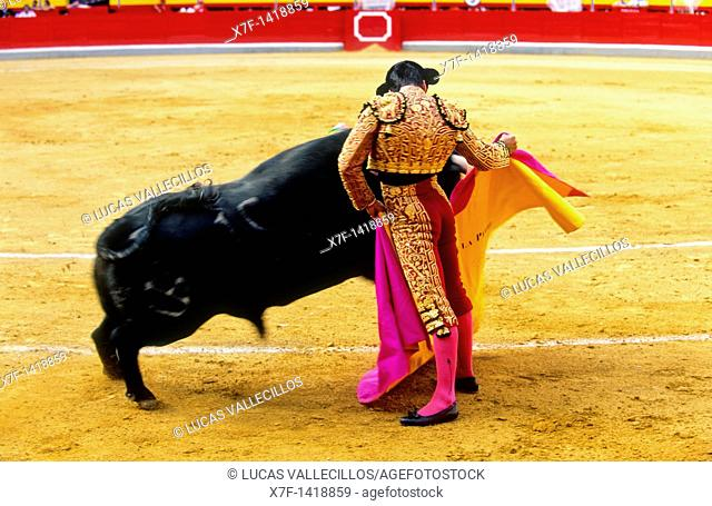Bullfight at the Plaza de Toros, Granada, Andalusia, Spain, Europe