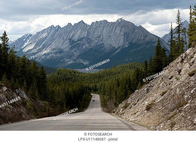 Road passing through a forest, Maligne Lake Road, Jasper National Park, Alberta, Canada