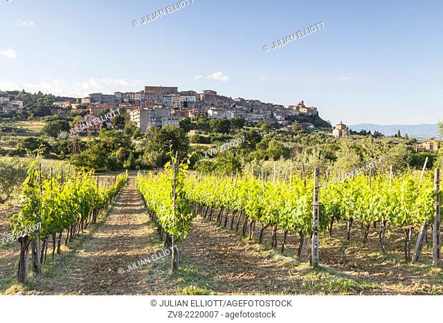 Vineyards near to Chianciano Terme, Tuscany. The area is a major producer of food and drink. It is known world-wide for its wine