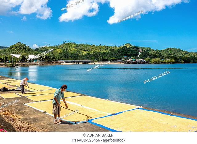 Philippines. Leyte. Baybay. Spreading rice out to dry beside the sea