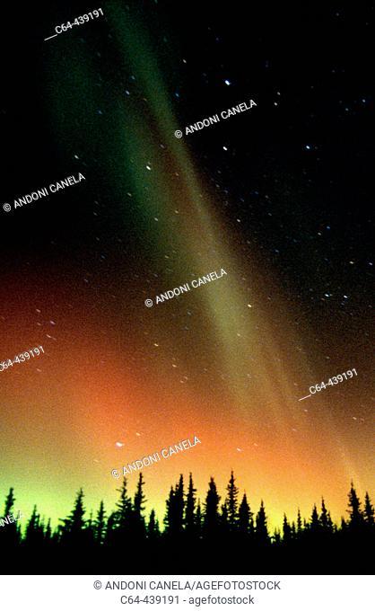 Aurora Borealis or Nothern Lights. Denali National Park. Alaska. USA